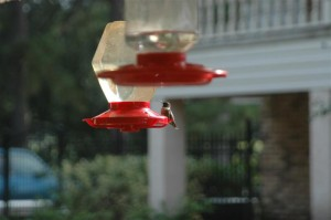Single Hummingbird